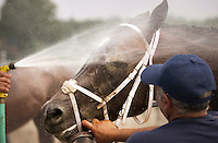 Saratoga Springs NY.A thoroughbred gets a cooling shower at the finish line after a race on a hot opening day for the 138th season of thoroughbred racing at the Saratoga Race Course ..©Mitch Wojnarowicz All Rights Reserved
