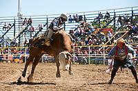 Bull rider and rodeo clown at Mareeba Rodeo.  Mareeba, Queensland, Australia