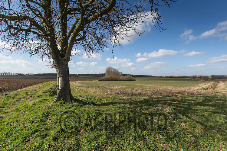 Agricultural landscape in Lincolnshire<br /> Picture Tim Scrivener 07850 303986<br /> <br /> Lincolnshire Arable Agricultural Landscape Tree Field Big Wide