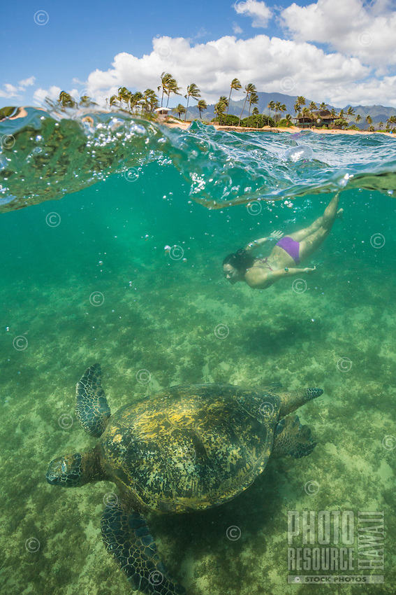 Green sea turtle and young woman swimming off the coast of Oahu's North Shore