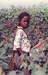 Girl picking cotton on farm of Minnie Guise in Mt. Meigs, Ala. Photo by Jim Peppler taken for two essays published in The Southern Courier on September 10, and Sept. 17, 1966. Copyright Jim Peppler/1966. This and over 10,000 other images are part of the Jim Peppler Collection at The Alabama Department of Archives and History:  http://digital.archives.alabama.gov/cdm4/peppler.php
