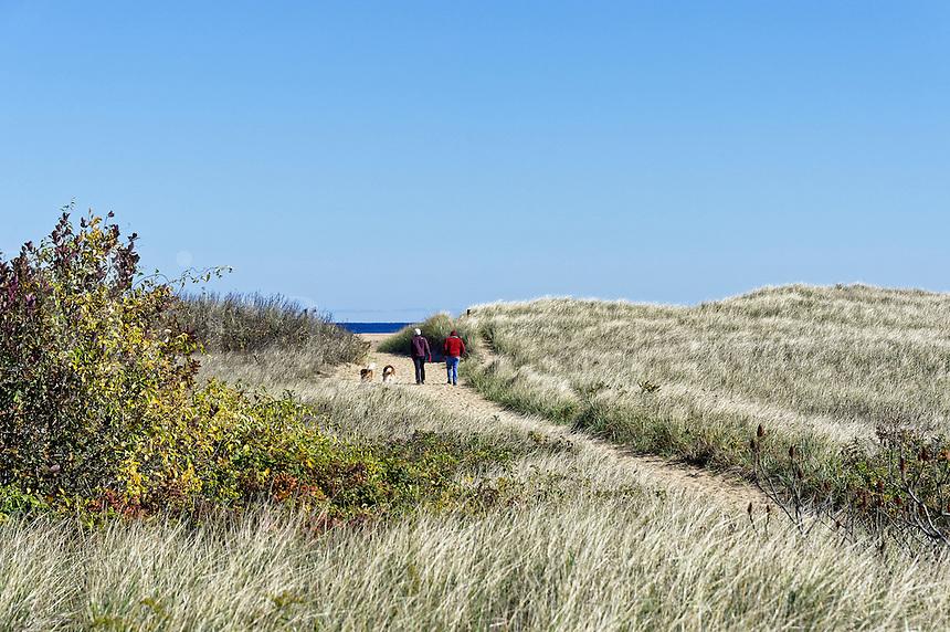 Couple walking dogs on beach path, Plum Island, Massachusetts, USA.