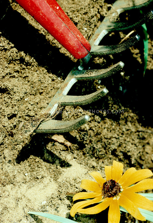Soil and garden rake, with daisy flower, tilling the ground