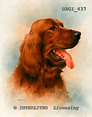 GIORDANO, REALISTIC ANIMALS, REALISTISCHE TIERE, ANIMALES REALISTICOS, paintings+++++,USGI437,#A# dogs