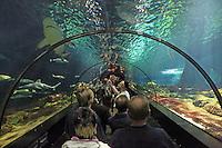Besucher des Sea World Orlando im Shark-Experience Tunnel