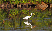 "The Everglades are subtropical wetlands located in the southern portion of the U.S. state of Florida, comprising the southern half of a large watershed. The system begins near Orlando with the Kissimmee River, which discharges into the vast but shallow Lake Okeechobee. Water leaving the lake in the wet season forms a slow-moving river 60 miles (97 km) wide and over 100 miles (160 km) long, flowing southward across a limestone shelf to Florida Bay at the southern end of the state. The Everglades are shaped by water and fire, experiencing frequent flooding in the wet season and drought in the dry season. Writer Marjory Stoneman Douglas popularized the term ""River of Grass"" to describe the sawgrass marshes, part of a complex system of interdependent ecosystems that include cypress swamps, the estuarine mangrove forests of the Ten Thousand Islands, tropical hardwood hammocks, pine rockland, and the marine environment of Florida Bay.."