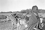 A Turkana family on migration.<br /> <br /> The Turkana are nomadic herders that depend on good grazing for their lifestock, on which they are entirely dependent on,  and will walk many miles to where the rains have fallen to find fresh pasture to graze<br /> Northern Kenya.
