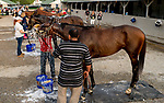 LOUISVILLE, KY - MAY 03: Magnum Moon, trained by Todd Pletcher, Noble Indy, trained by Todd Pletcher, Vino Rosso, trained by Todd Pletcher, Audible, trained by Todd Pletcher, get baths after exercising in preparation for the Kentucky Oaks at Churchill Downs on May 3, 2018 in Louisville, Kentucky. (Photo by Scott Serio/Eclipse Sportswire/Getty Images)