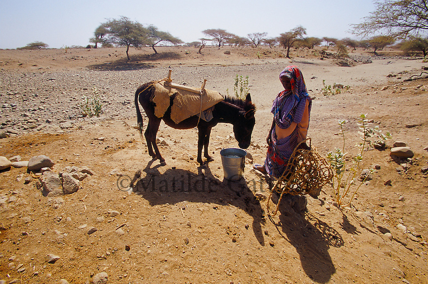 Eritrea - Gash Barka - Old woman standing next to her donkey. As a result of 30 years of war for independence against Ethiopia (from 1961 to 1991) and another 3 years from 1997 to 2000, there are 50,000 Eritreans currently living in internally displaced (IDP) camps throughout the country. These IDPs have fled three times in the last 10 years, each time because of renewed military conflict. They lived in relatives' homes when lucky enough, but mostly, the fled to the mountains, where they attempted to do what Eritreans do best, survive. Currently there is no Ethiopian occupation in Eritrea, but landmines prevent the IDPs from finally going home. .It is estimated that every Eritrean family lost two or three members to the war which makes the reality of the current emergency situation even more painful for Eritreans worldwide. Currently, the male population has been decreased dramatically, affecting the most fundamental socio-economic systems in the country. Among the refugee population, an overwhelming majority of families are female-headed, severely affecting agricultural production. For, IDPs in particular, 80% of households are female-headed..The unresolved border dispute with Ethiopia remains the most important drawback to Eritrea's socio-economic development, as national resources (human and material) continue to be prioritized for national defense. Eritrea is vulnerable to recurrent droughts and variable weather conditions with potentially negative effects on the 80 percent of the population that depend on agriculture and pastoralism as main sources of livelihood. The situation has been exacerbated by the unresolved border dispute, resulting in economic stagnation, lack of food security and increased susceptibility of the population to various ailments including communicable diseases and malnutrition. .
