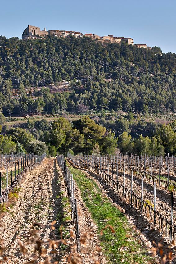 View over the vineyard in spring, vines in Cordon Royat training, the Le Castelet village on a hill top in the background. Mourvedre Domaine de la Tour du Bon Le Castellet Bandol Var Cote d'Azur France
