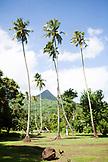 FRENCH POLYNESIA, Moorea. Landscape on Moorea Island.