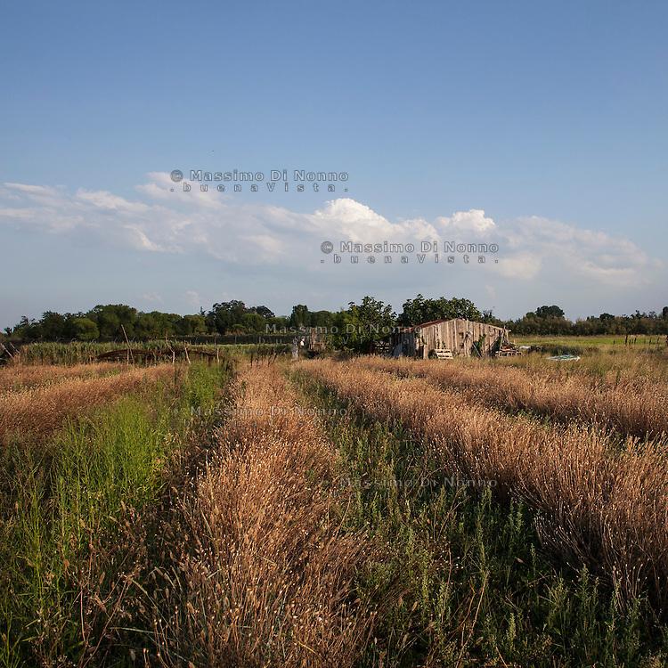 Sant'Erasmo (Venezia): l'isola di Sant'Erasmo fin dall'antichit&agrave; &egrave; sempre stata l'orto di Venezia ed ancora oggi continua a mantenere la sua vocazione agricola.<br /> <br /> Sant'Erasmo (Venice): Sant'Erasmo Island
