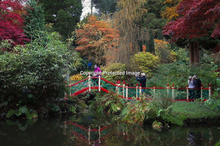 30/10/16<br /> <br /> Many stunning trees are putting on a spectacular autumn display in the Chinese Garden at Biddulph Grange near Stoke on Trent, Staffordshire. Gardeners at the National Trust property are saying the frost-free autumn may have helped to make this one of the most colourful seasons in many years.<br /> <br /> <br /> All Rights Reserved F Stop Press Ltd. +44 (0)1773 550665