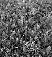 &quot;Plant Needles&quot; Nikiski Beach, Alaska<br />
