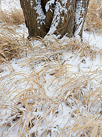 Dried Grasses and the bottom of a tree trunk offer a little color in winter, Rock Run Forest Preserve, Will County, Illinois