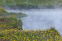 Flowers growing around geothermal hot spring, Iceland