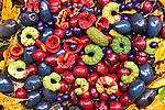 Tropical forest fruits and seeds of Far North Queensland
