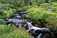 Upper Paradise Creek flows around and through wildflowers in bloom, Mount Rainier National Park, Washington State.....Photographed in 35mm format on Velvia 50 film.