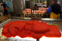 Caviar production area of Ocean West Fish plant in Ust Bolsheretsk.  Genmadi Yuriev Fish plant manager of fish plant named Ocean West (Okean Vatav). They run the caviar thru a mesh screen to separate the connective tissue. And then add preservative to make it last un-refrigerated for about a week or refrigerated for about 4-6 months.