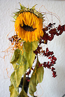 Wilted sunflower bouquet. Concept - retirement obsolete. Balucki District Lodz Central Poland