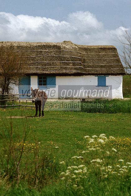Europe/France/Pays de la Loire/85/Vendée/Marais breton-vendéen/Centre du Daviaud/La Barre-de-Monts: Ecomusée vendéen - bourrine et âne