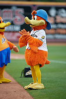 Akron RubberDucks mascot Webster the Duck before an Eastern League game against the Reading Fightin Phils on June 4, 2019 at Canal Park in Akron, Ohio.  Akron defeated Reading 8-5.  (Mike Janes/Four Seam Images)
