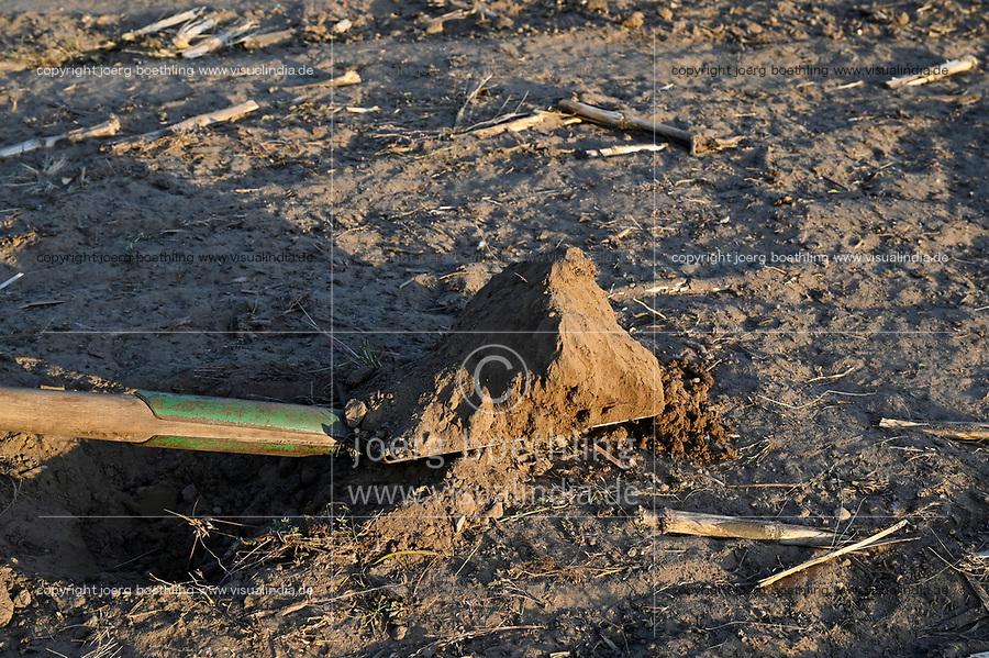 GERMANY, soil sample on field / DEUTSCHLAND, Plauerhagen, Ackerbau, Spaten mit Bodenprobe, Sandboden