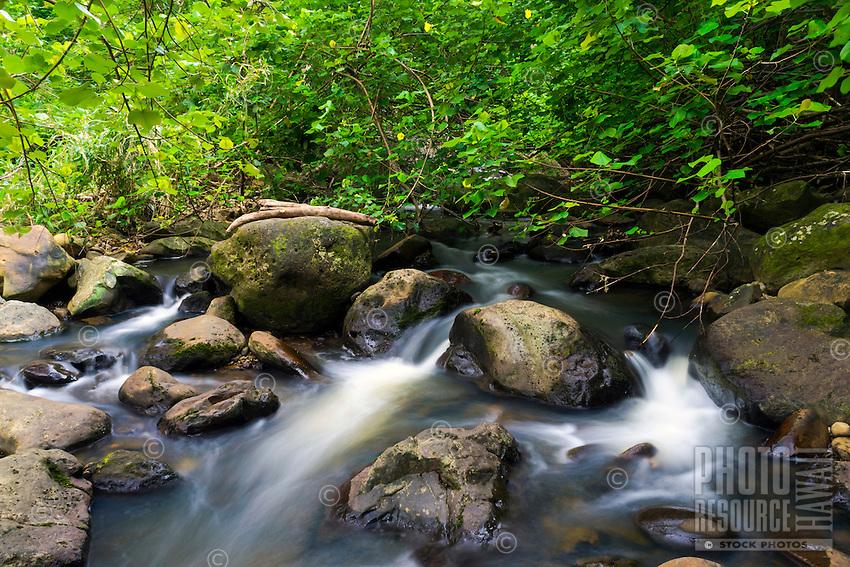 A flowing river with lush foliage near Hawi, Hawai'i Island.