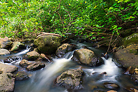 A flowing river with lush foliage near Hawi, Hawai'i Island.