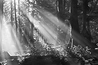 &quot;Good Day Sunshine&quot;<br />