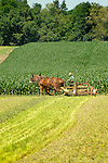 Amish plowing field