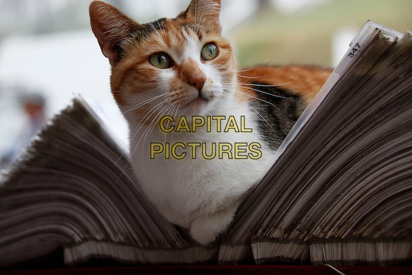 CAT.A cat rests in a book in a small town in Chile, South America.31st January 2209.travel atmosphere animal kitten .CAP/GH.©Gardner Hamilton/Capital Pictures