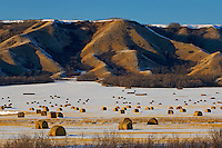 Bales and hills in winter<br /> Qu'Appelle Valley<br /> Saskatchewan<br /> Canada