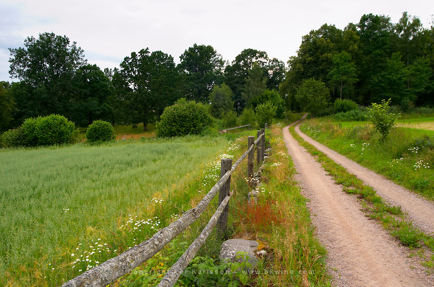 Country road, wooden fence and field. Through the forest. Smaland region. Sweden, Europe.