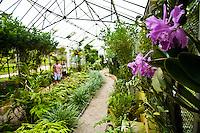 Rio de Janeiro_RJ, Brasil...Estufa no Jardim Botanico do Rio de Janeiro...The greenhouse in the  Botanic Garden in Rio de Janeiro...Foto: JOAO MARCOS ROSA / NITRO
