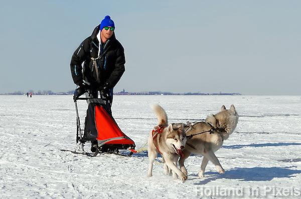 Sledehonden op de bevroren Gouwzee