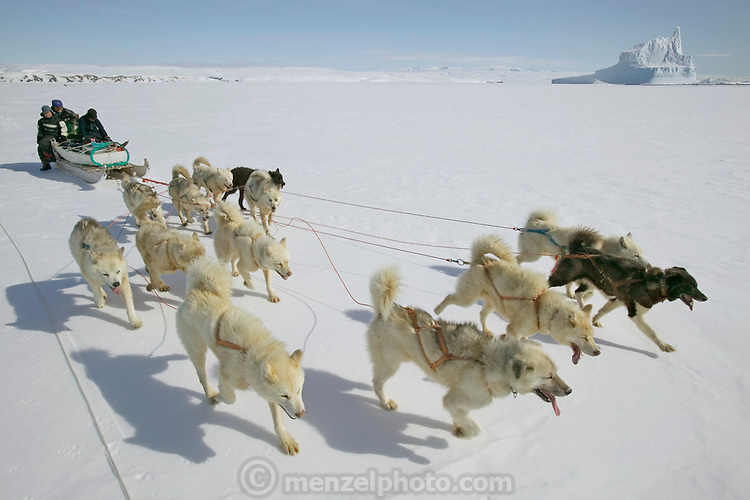 (MODEL RELEASED IMAGE). The Madsen family on a day of dogsled travel. When the snow crust is hard enough to ensure that the dogs won't break through, they can pull the half-ton weight of the sled for hours on end. On level ground, the animals pull at about the pace of a running human, but the sleds can whip down hills so fast that drivers must step on the brake at the rear of the sled to avoid running over their dogs. The dog sled is on flat sea ice here: a giant iceberg is in the background at the ice edge.  (Supporting image from the project Hungry Planet: What the World Eats.)