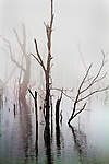 Bare trees stand in a thick fog at Lake Remembrance in Blue Springs, Missouri.  Reflections of the trees can be seen in the still water.