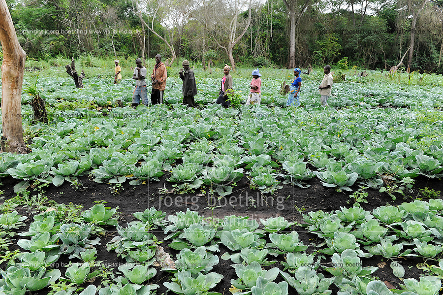 Afrika ANGOLA Malanje , Foerderung von Kleinbauern, Gemueseanbau, Feld mit Kohl - Africa ANGOLA Malanje , support of small scale farmers , cultivation of vegetables like cabbage for additional income generation