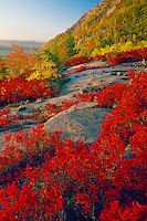 Blueberries on Champlain Mountain<br />   and Great Head<br /> Acadia National Park<br /> Mount Desert Island,  Maine