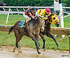 Willful Warrior winning at Delaware Park on 9/19/16