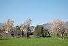 blooming almond trees<br /> <br /> almendros en flor<br /> <br /> blühende Mandelbäume<br /> <br /> 3008 x 2000 px<br /> 150 dpi: 50,94 x 33,87 cm<br /> 300 dpi: 25,47 x 16,93 cm