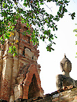 Leaves-Ruin and Buddha-Wat Phra Mahathat-Ayatthaya