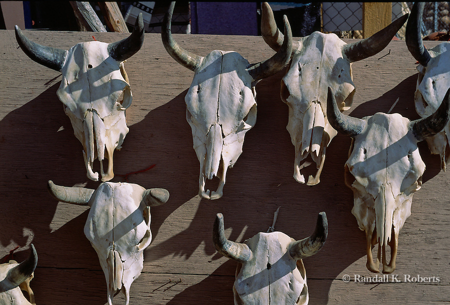 Cow skulls for sale at roadside stand, Taos, New Mexico