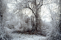 FROST COVERED FOREST &amp; FOG<br /> Winter landscape