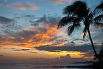 Sunset and Palm Po'Ipu,  Kauai, Hawaii