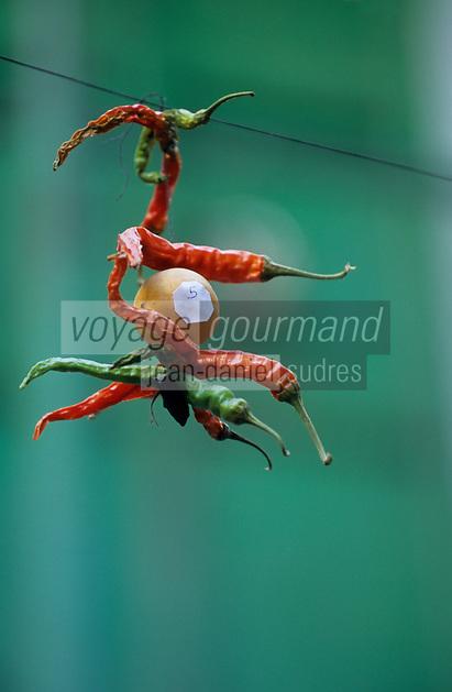 Asie/Inde/Rajasthan/Udaipur: Détail piments suspendus contre les mauvais esprits près du marché Bara Bazar