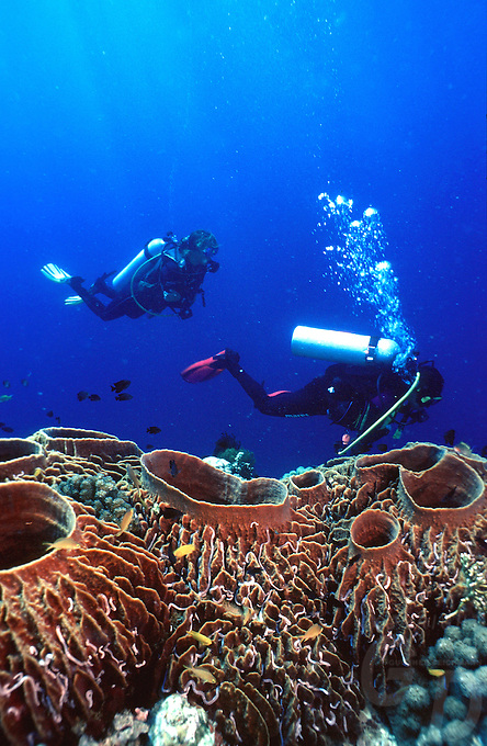 DIVERS OVER A FAN CORAL