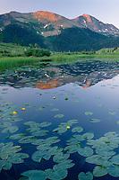 Yellow pond lilies<br /> Snowdon Peak from Molas Pass<br /> San Juan National Forest<br /> San Juan Mountains, Colorado