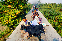 Passnegers, both human and goat, travelling on the roof of a train. In Bangladesh many people ride on the roofs of trains as frequently that is the only space available. For others, the fares are too high and can be avoided or reduced by travelling on the roof. However, the riding on roofs and other parts of train exteriors leads to regular accidents, many of them fatal..